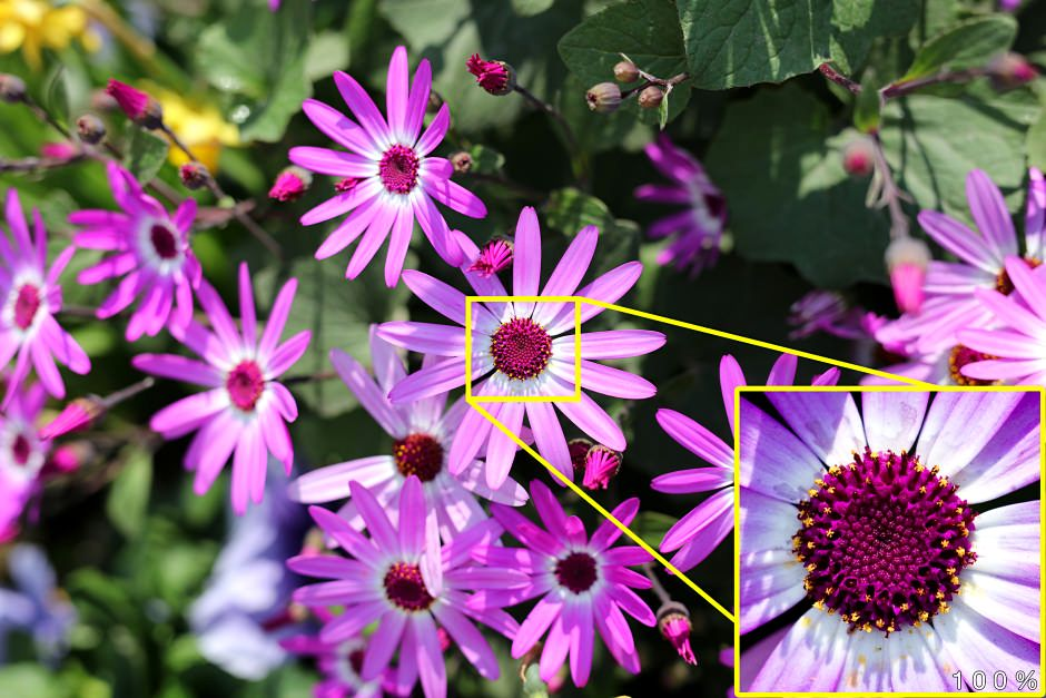 100-percent-flower-sigma-novosti