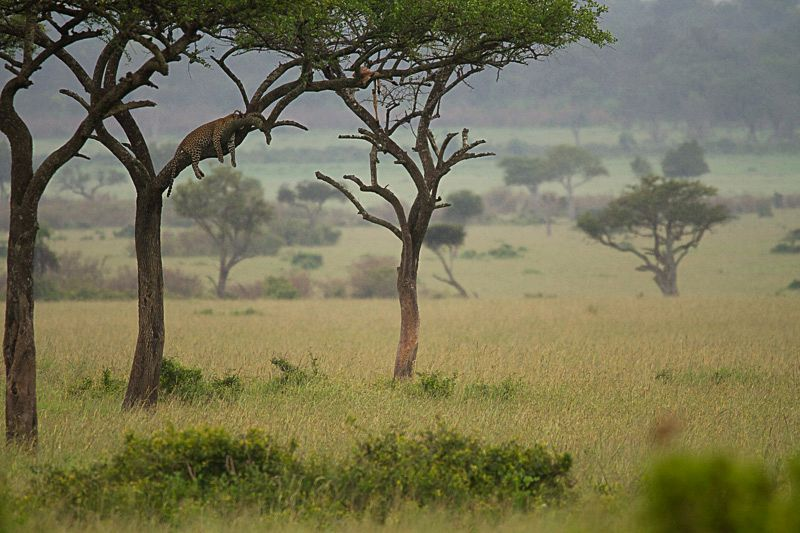 Safari-Blog_44_sigma_novosti