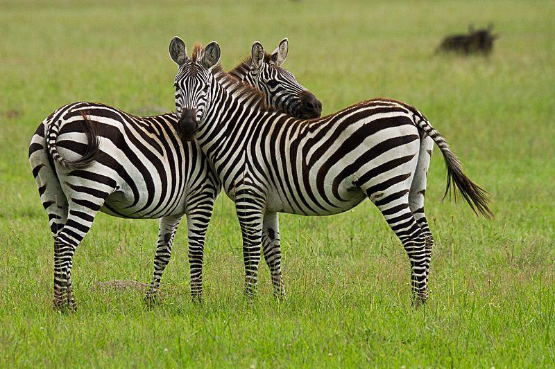 Safari-Blog_69_sigma_novosti