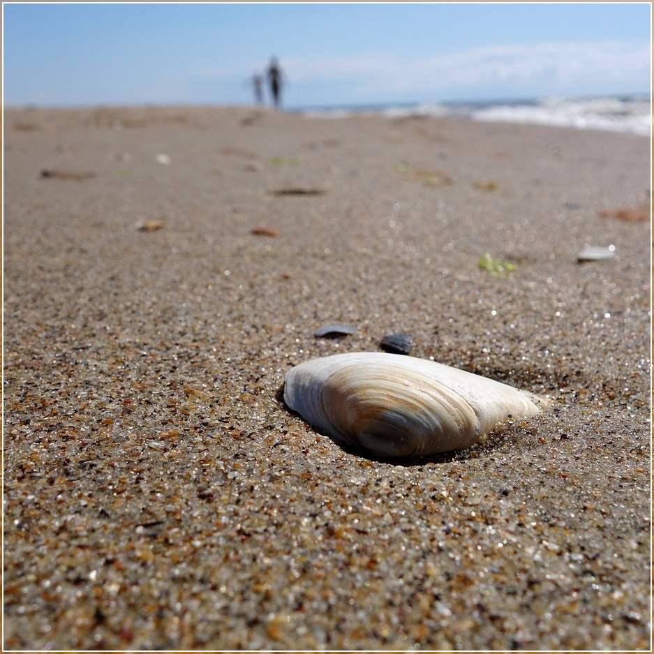 Морское побережье. Идеи для фотографии на отдыхе и композиция