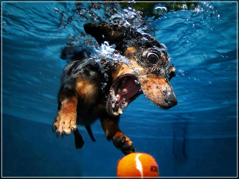 Съёмка под водой фото