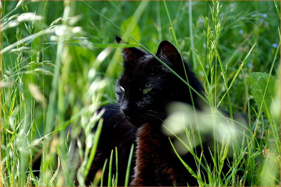 Кошки фото или как правильно снимать кошек