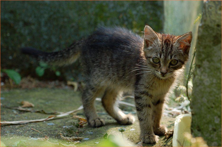 Как правильно фотографировать кошек