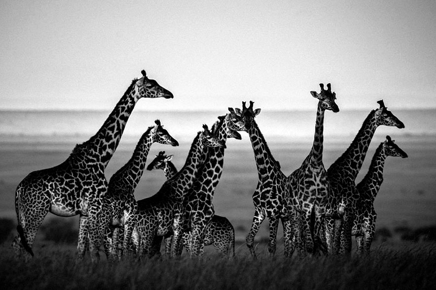 !!!!!!111!!!!!!03-family-album-of-wild-africa