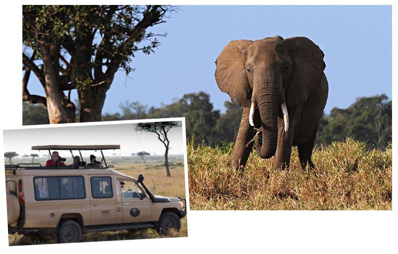 sigma-safari-novosti-image-70517--91073