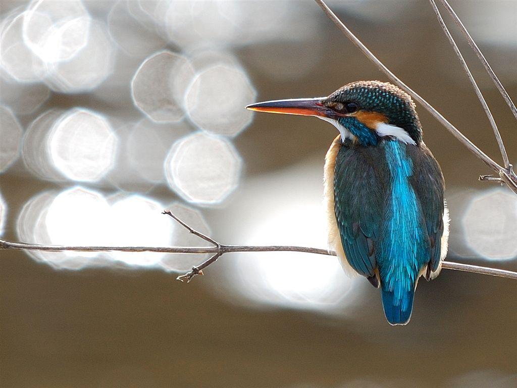 kolibry02