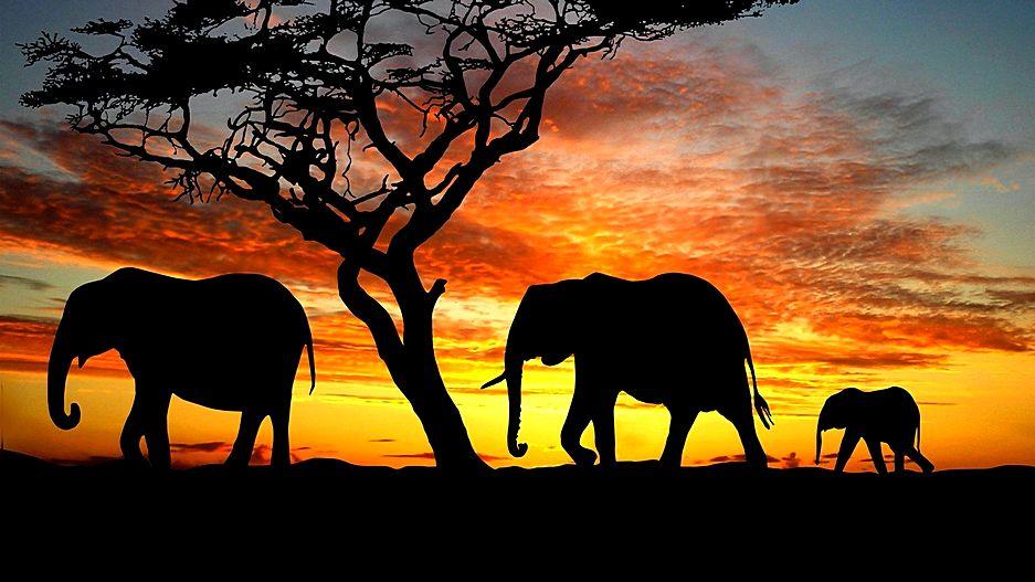 Съемка в Намибии на фототехнику SIGMA